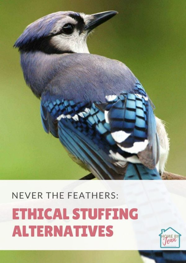 Never The Feather: Ethical Stuffing Alternatives