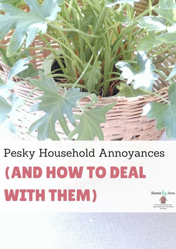 Pesky Household Annoyances (And How To Deal With Them)