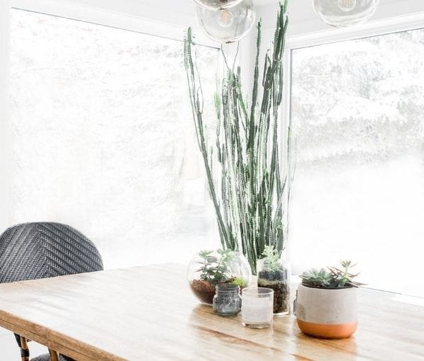 kitchen table with green plants in center