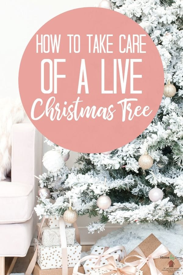How To Take Care Of A Live Christmas Tree
