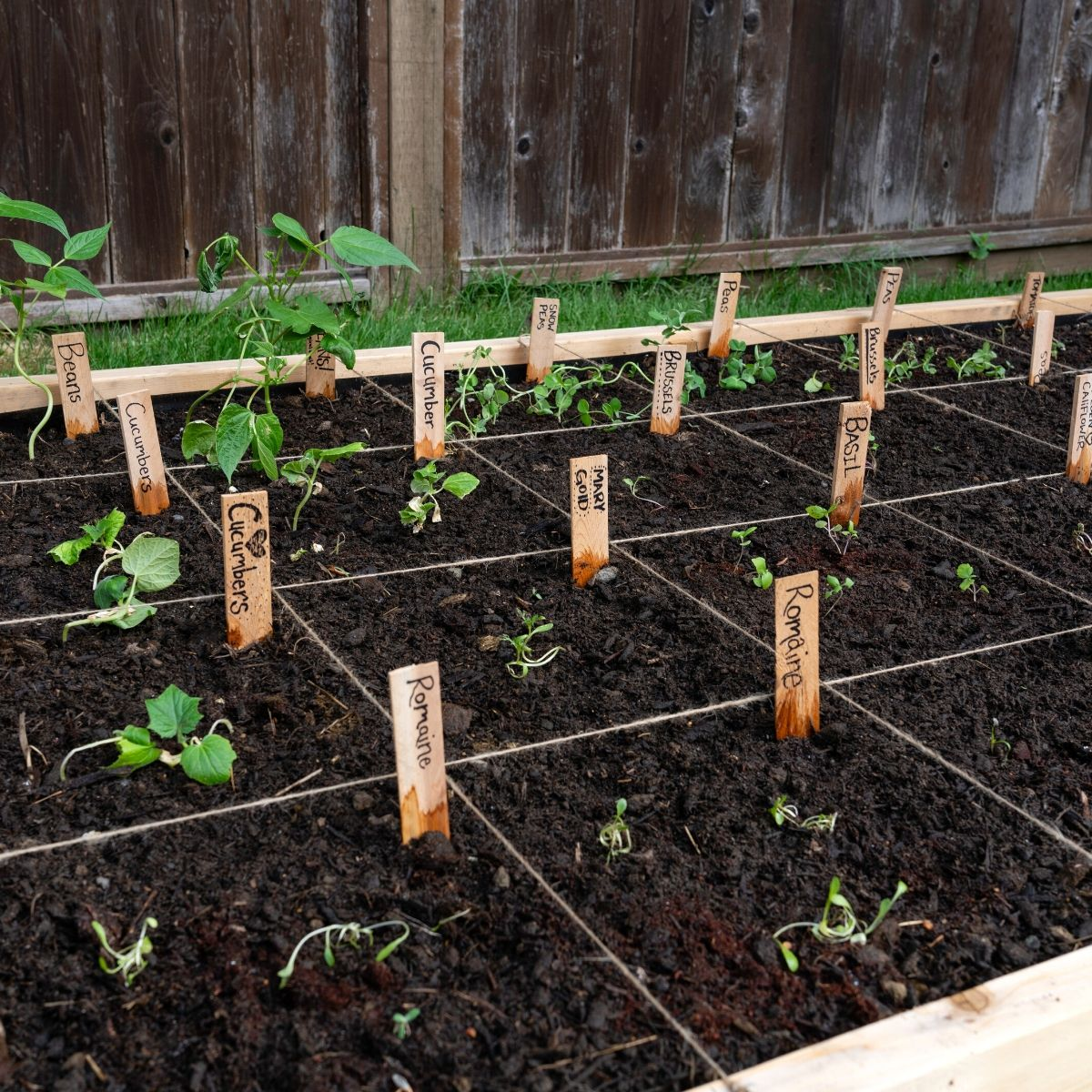 square foot garden with seedlings