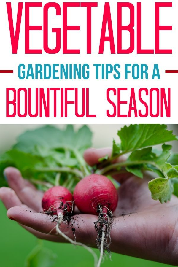 These vegetable gardening tips are a great way to get a jumpstart on the garden of your dreams! You'll be growing your own food with ease very soon! Find out how to start a garden, plant a garden, grow a garden and maintain a garden with ease. You'll love being able to eat what you grow just by walking out to your garden and picking it. #garden #vegetablegarden #gardeningtips #DIY #summergarden
