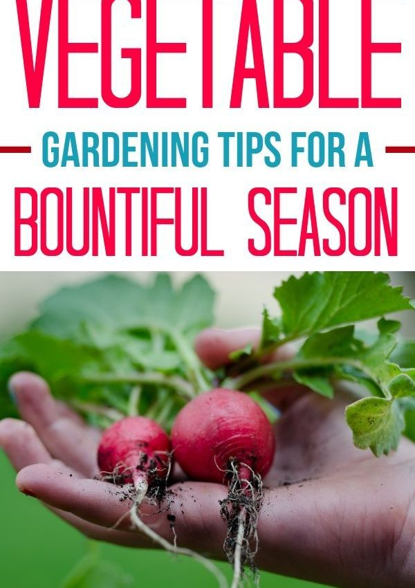 Vegetable Gardening Tips for a Bountiful Season