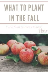 what to plant in your fall garden