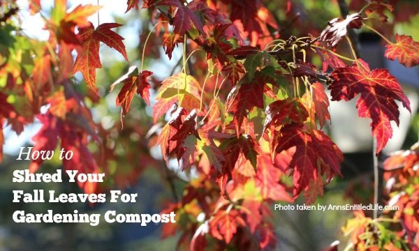 Shred Your Fall Leaves For Gardening Compost