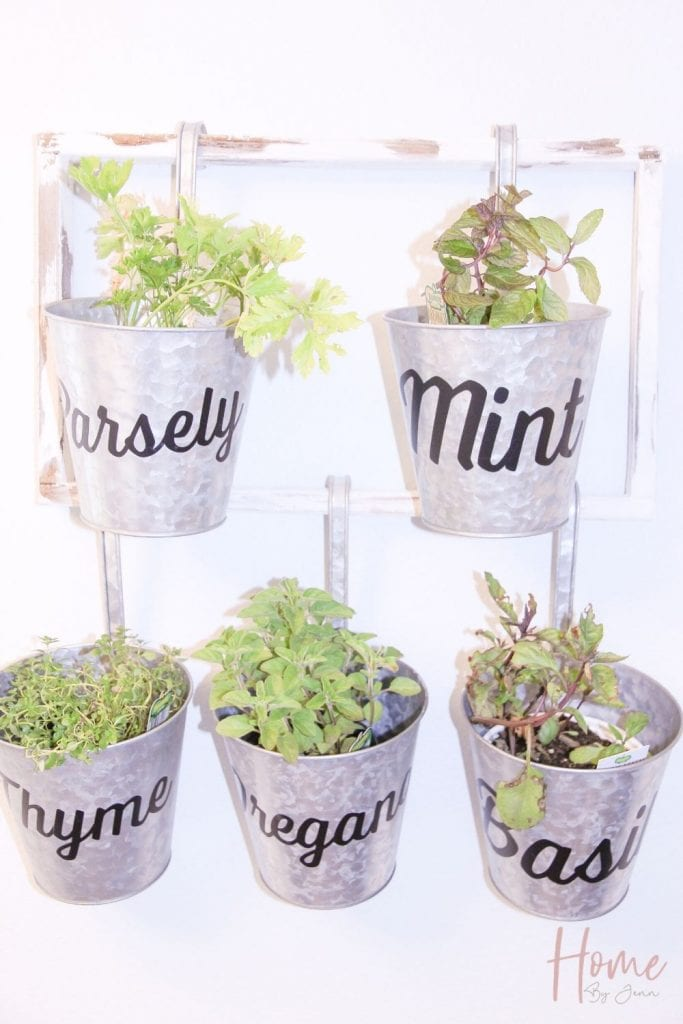 Herbs hanging on a wooden frame making an indoor herb garden.  They are in galvanized planters.  The herbs include parsley, mint, oregano, thyme, and basil.