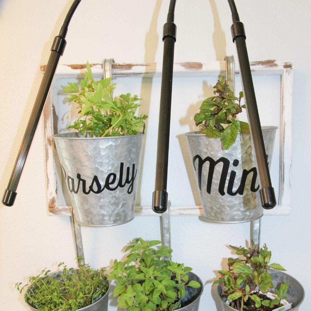 Indoor herb garden with grow lights shown.