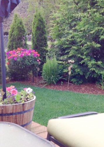 How to Maintain a Lawn with these Lawn Care Tips