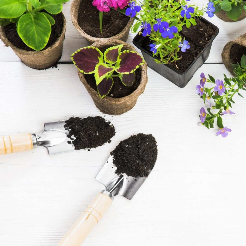 2 hand shovels with dirt and some potted plants on a table