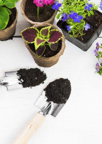 10 Essential Gardening Tools for a Beginner Gardener