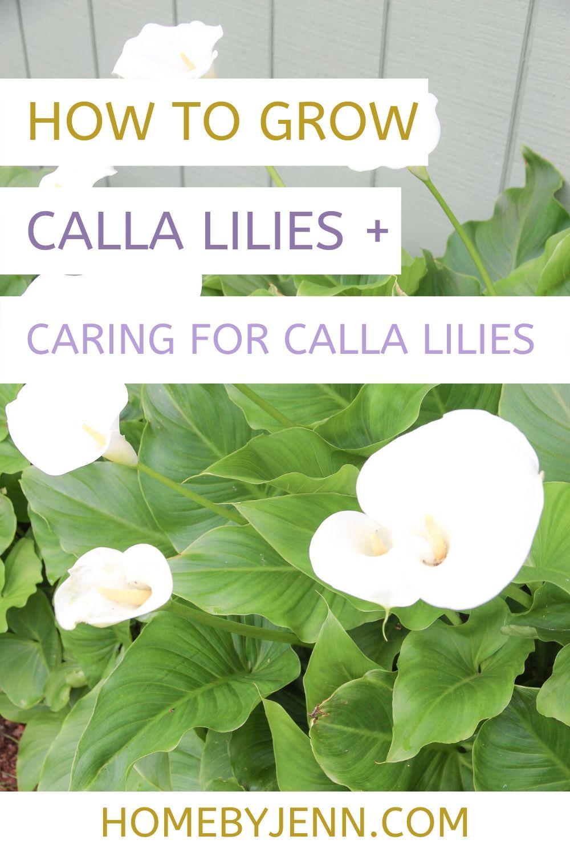 calla lilies via @homebyjenn